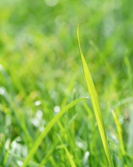 Gros plan des feuilles d'herbe floue
