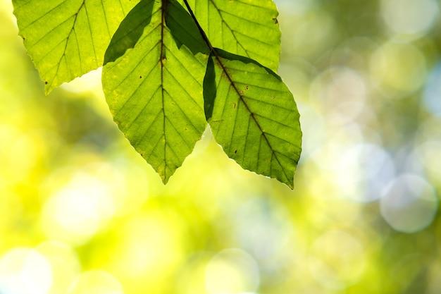 Gros plan de feuilles jaunes vives et lumineuses sur les branches d'un arbre dans le parc en automne détail du feuillage des forêts d'automne.
