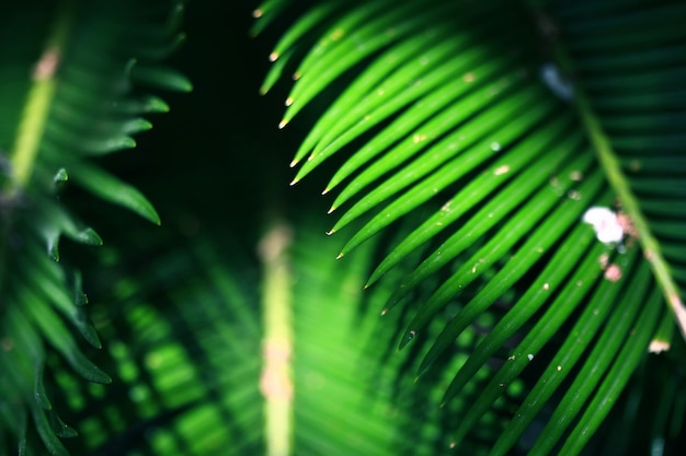Gros plan, feuilles, jungle