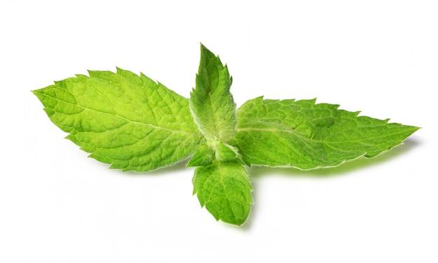 Gros plan des feuilles de menthe fraîche