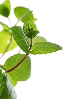 Gros plan des feuilles de menthe
