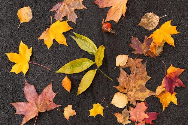 Gros plan des feuilles mortes colorées sur l'asphalte, vue du dessus