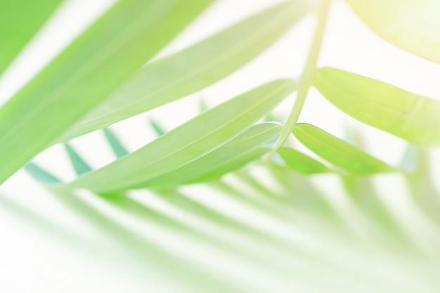 Gros plan de feuilles de palmier sur jaune pastel.