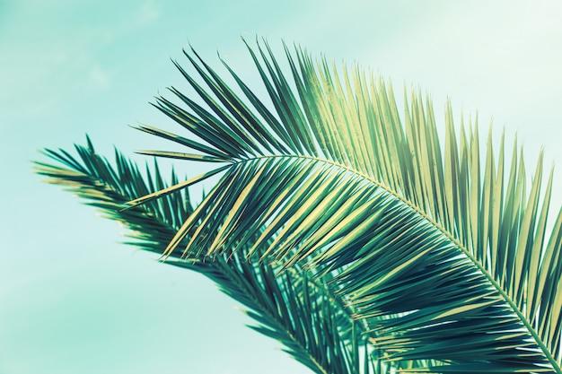 Gros plan, feuilles, palmiers