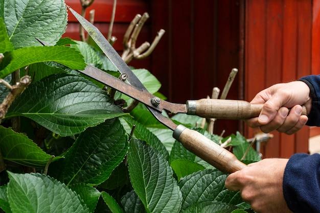 Gros plan des feuilles de la plante de coupe