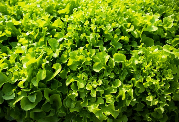 Gros plan des feuilles de plantes végétales