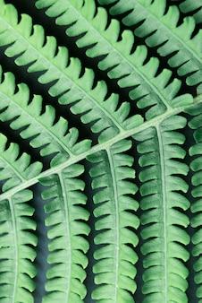 Gros plan des feuilles tropicales