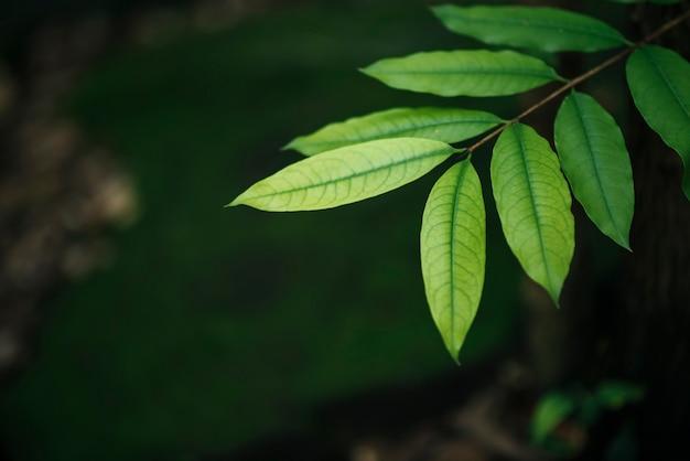 Gros plan des feuilles vertes sur fond de feuille floue.