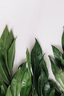Gros plan de feuilles vertes isolés sur fond blanc