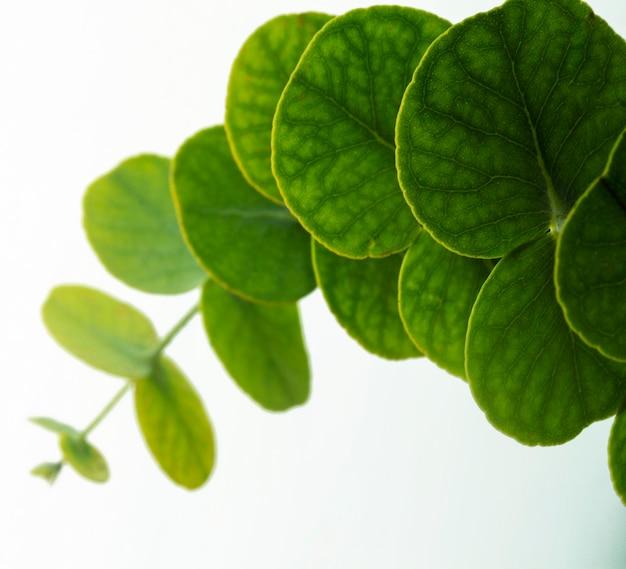 Gros plan des feuilles vertes rondes