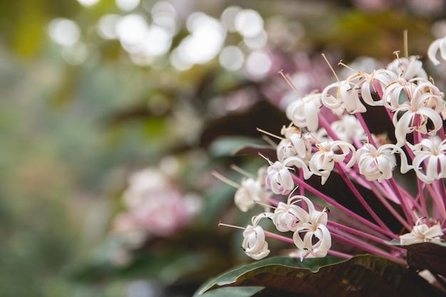 Gros plan, fleur blanche, devant, flou, nature