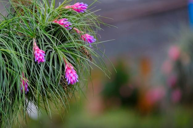 Gros plan de la fleur de broméliacées
