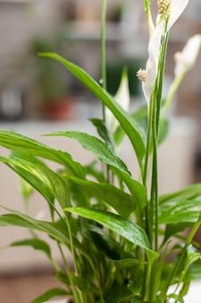 Gros plan sur une fleur dans la cuisine à domicile pendant que la femme jardine. décoratif, plantes, croissance, mode de vie, design, botanique, saleté, domestique, croissance, feuille, ensemencement de passe-temps heureux