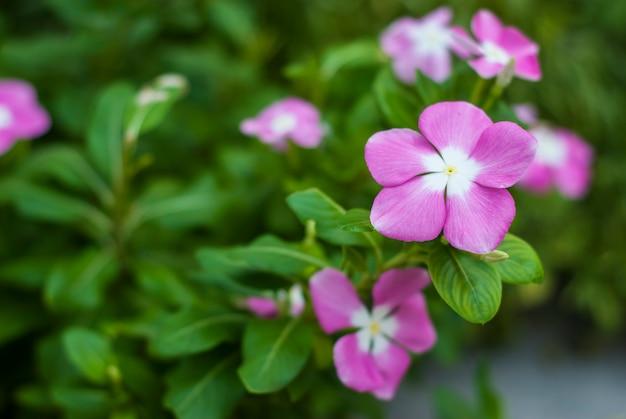 Gros plan fleur dans le jardin
