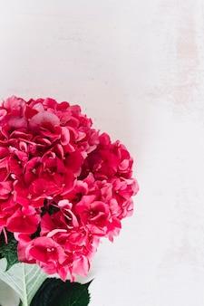 Gros plan d'une fleur d'hortensia rouge sur fond grunge