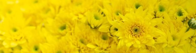 Gros plan de la fleur de maman jaune en utilisant comme arrière-plan la flore naturelle