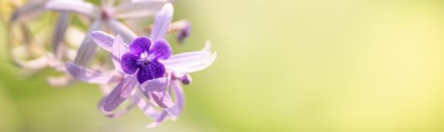 Gros plan de la fleur d'orchidée pourpre avec fond de nature verte sous la lumière du soleil