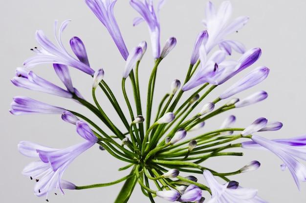 Gros plan d'une fleur pourpre