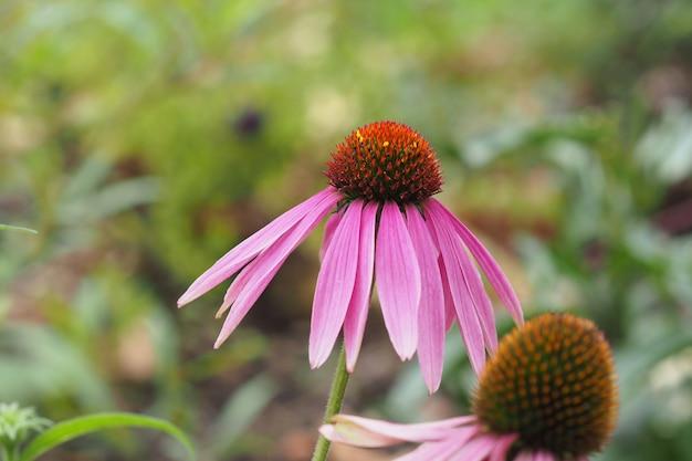 Gros plan d'une fleur rose pendant la journée derrière un fond vert