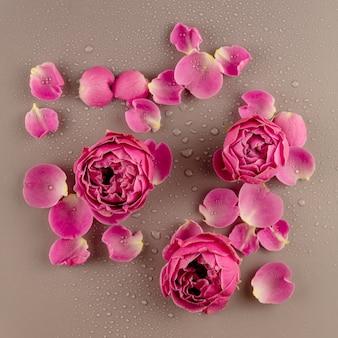 Gros plan sur une fleur rose rose et des pétales recouverts de gouttes d'eau. fond de belle fleur. vue de dessus
