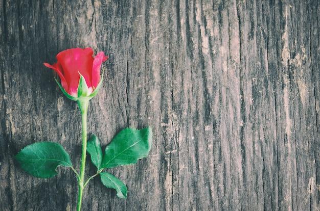 Gros plan d'une fleur rose rouge sur fond en bois avec ton vintage, la rose de la saint-valentin