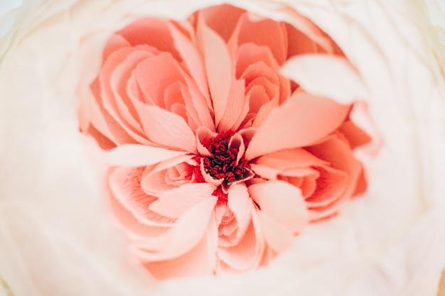 Gros plan d'une fleur rose tendre. printemps