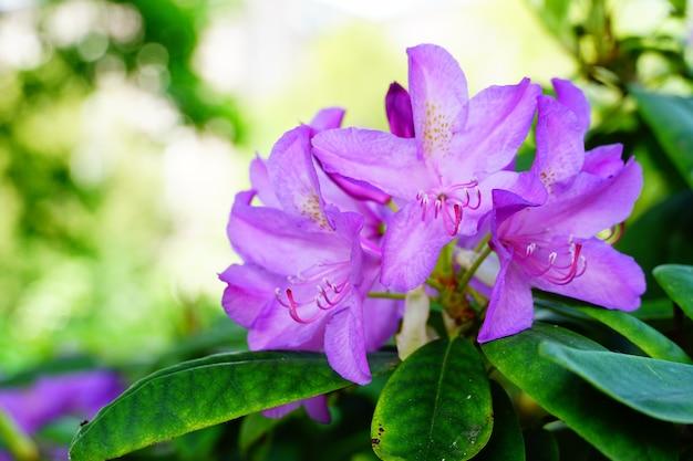 Gros plan d'une fleur violette