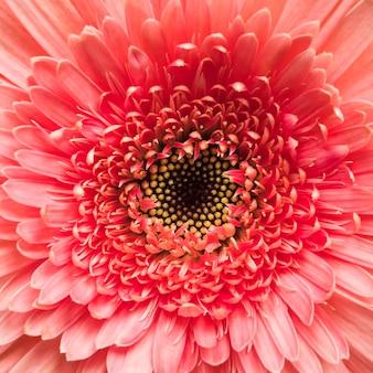 Gros plan, de, fleur