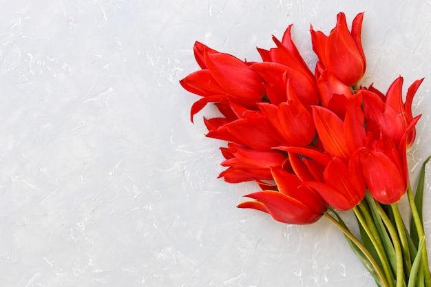 Gros plan de fleurs de belles tulipes rouges sur fond gris.