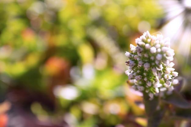 Gros plan de fleurs blanches par une journée ensoleillée