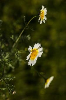 Gros plan de fleurs blanches