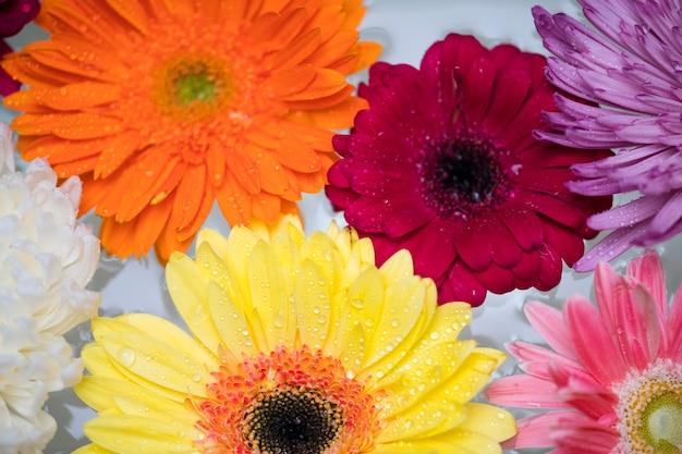 Gros plan de fleurs colorées flottant sur fond d'eau