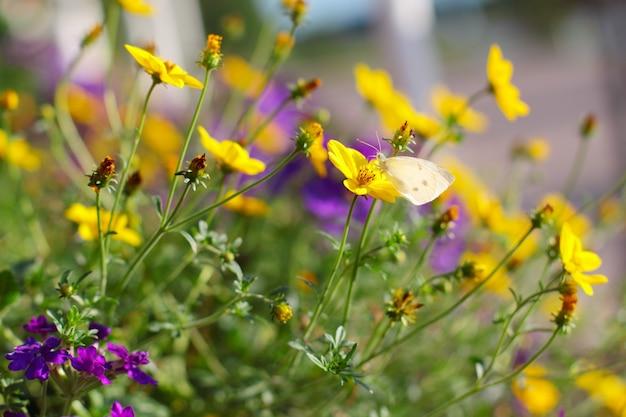 Gros plan sur les fleurs et les détails du papillon