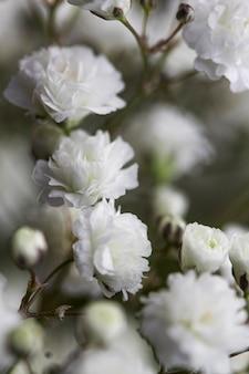 Gros plan de fleurs douces blanches