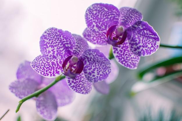 Gros plan de fleurs de fleurs violettes