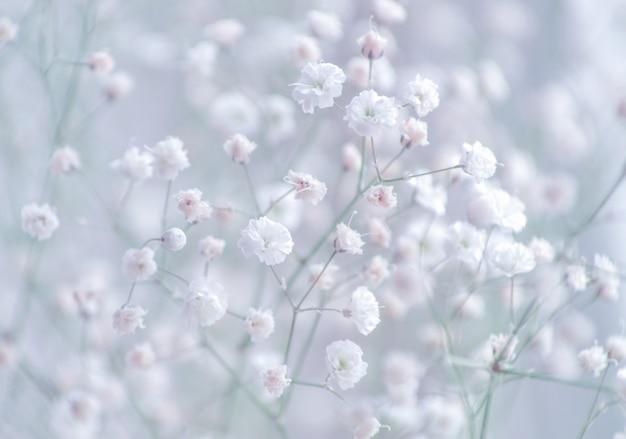 Gros plan de fleurs de gypsophile de souffle de bébé
