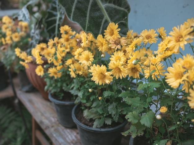 Gros plan de fleurs jaunes, photo couleur vintage