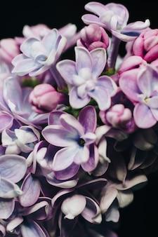 Gros plan de fleurs lilas sur une surface noire