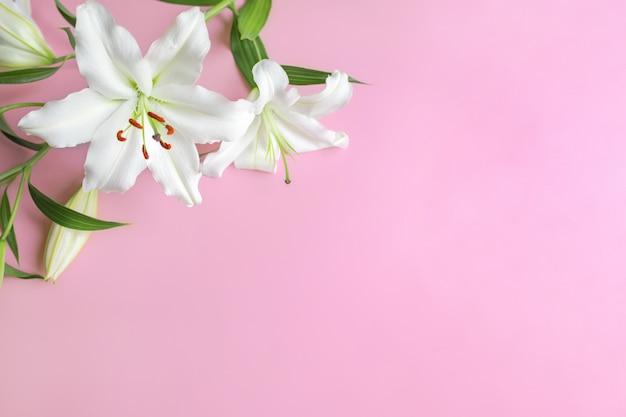 Gros plan de fleurs de lys blanc sur fond rose