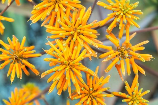 Un gros plan de fleurs avec mise au point sélective