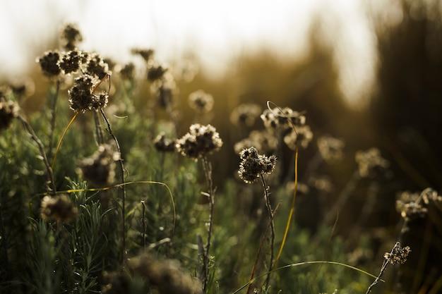 Gros plan, fleurs mortes