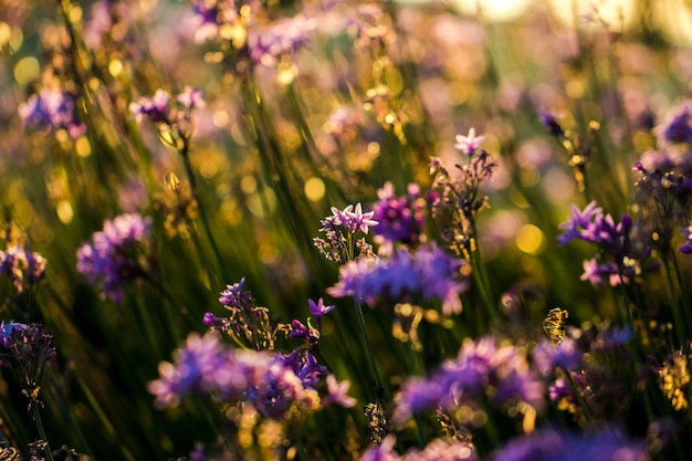 Gros plan de fleurs pétales violettes