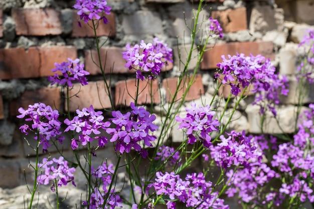 Gros plan de fleurs phlox dans le parc d'été