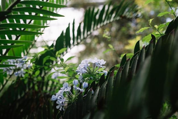 Gros plan, de, fleurs pourpres, sur, arbre