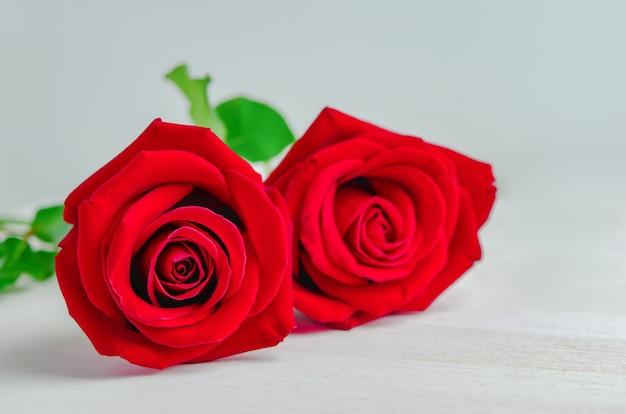 Gros plan de fleurs roses rouges sur fond blanc