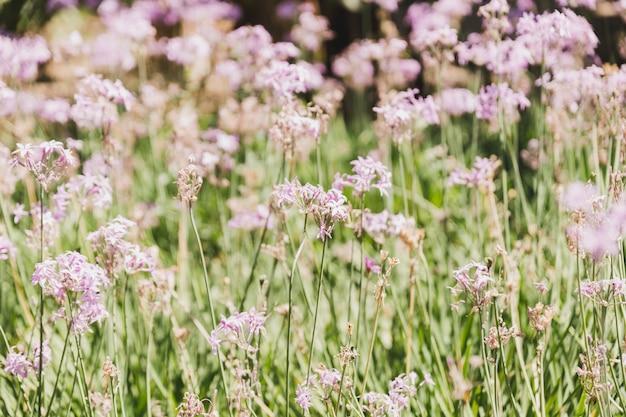 Gros plan de fleurs sauvages non cultivées