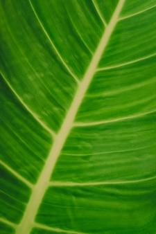 Gros plan de fond de feuille verte.