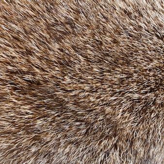 Gros plan de fond de fourrure de loup abstrait