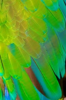 Gros plan de fond de plume de perroquet coloré