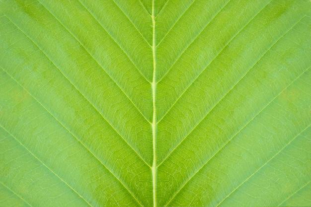 Gros plan fond de texture de feuille verte dans la forêt tropicale. concept de conservation de la nature et de réchauffement climatique.